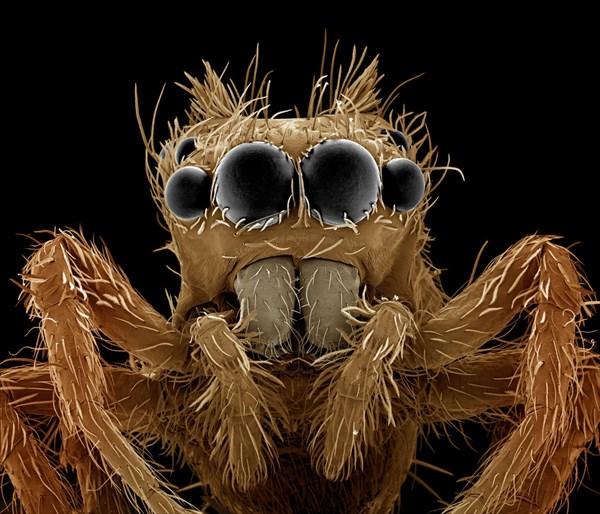 どう見ても地球外生命体! 人間の身近にいる生物のクローズアップ写真!