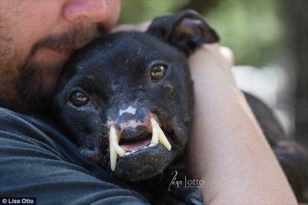 フロリダ州で発見されたセイウチのような犬 人間による虐待でこのような姿に