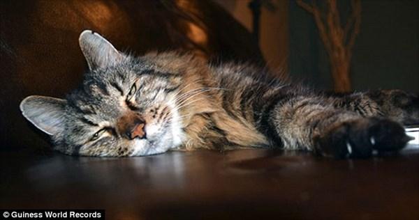 人間なら120歳! 「世界最長寿の猫」になった26歳の猫「コーデュロイ」