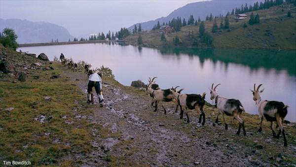 「私はヤギになりたい」ヤギとして生きることを試みた男 3日間ヤギと生活する
