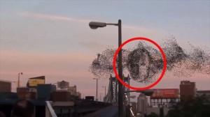 ロシアによる侵攻を予言? 鳥の群れがロシア大統領プーチンの肖像を描く!?