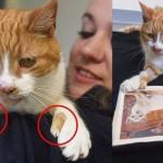 人間のような親指をもつ猫が発見される! 親指を使い人間のように物も掴む!