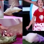 超能力少女!? 中国の5歳の女の子が、5種類の動物達を瞬く間に眠らせる?