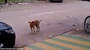 超かわいい! ラテンのリズムにのって踊る陽気な野良犬の動画!