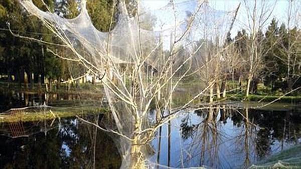 「悪魔のスライム」という現象でアルゼンチンの村が真っ白に! 原因はクモの糸