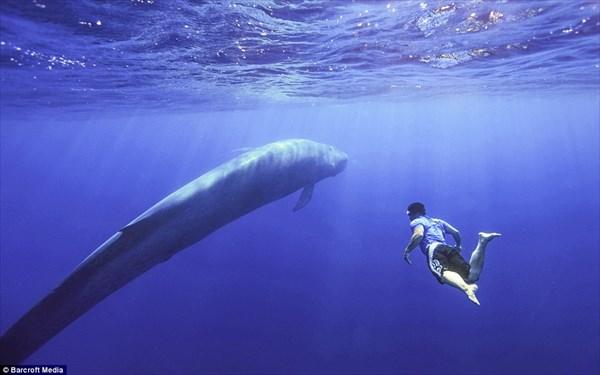 ドローンが撮影! 地球最大の生物シロナガスクジラとのツーショット写真!!