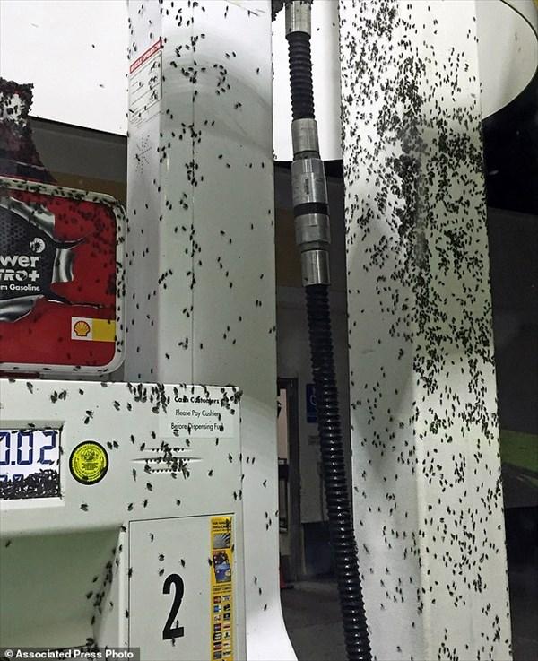 カリフォルニア州を大量の虫が襲う! もはや虫による黒い雨!!