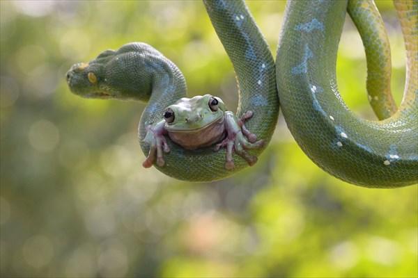 ジャカルタの動物園で撮影! 度胸のあるカエルと優しいヘビ!!