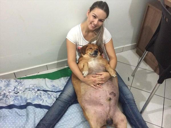 野良犬なのに超おデブ犬だったボリンナ 水泳でダイエットに成功!
