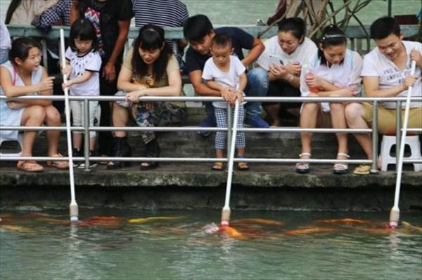 哺乳瓶でコイにエサをあげる中国の公園が大人気! 水も汚れにくくて一石二鳥?