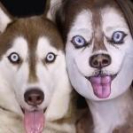 美容学校の講師が、飼い犬のシベリアンハスキーになるメイクアップ動画!