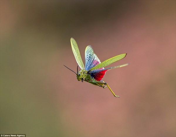 鳥や昆虫、さらにはトカゲ! アーネスト・ポッターが撮影した飛行する動物たち