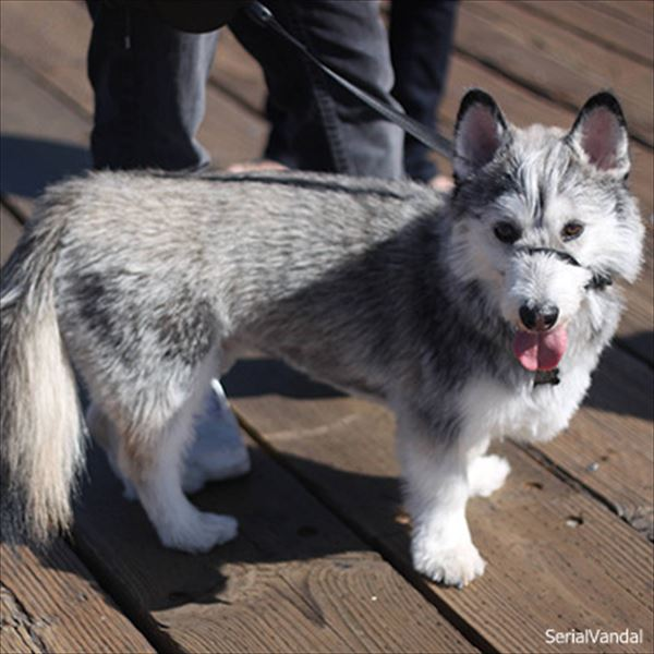 雑種とは呼ばせない! いろんな犬種との可愛いミックス犬!30選!!