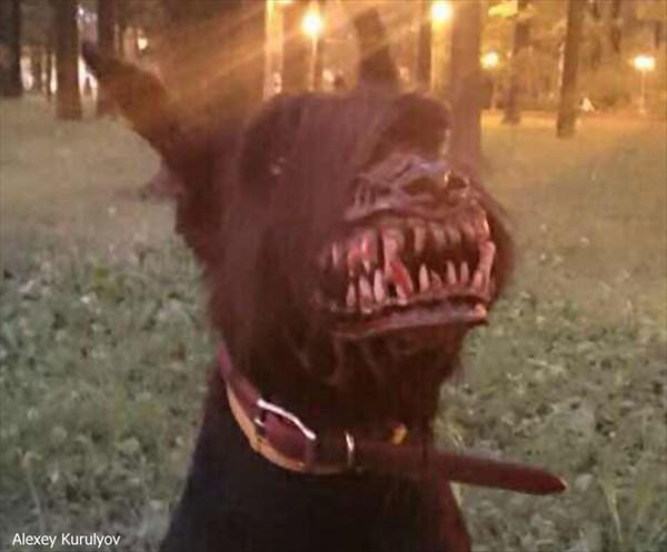 バイオハザードに出てたよね!? 飼い犬をゾンビ犬に変身させる口輪が怖い!