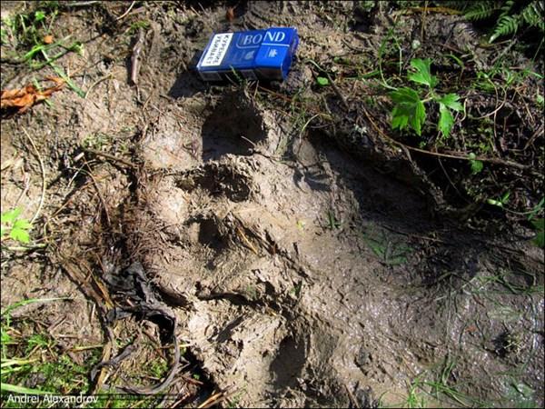 ロシアでキャンプで来ていた少年がイエティの足跡を発見? 通常の2倍の大きさ