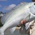 漁師の間で「青いヤツ」と呼ばれていた幻の魚「ブルーバスタード」新種認定へ!