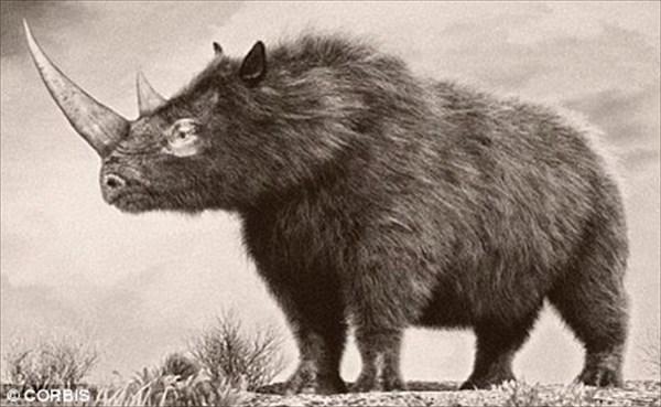 絶滅種のサイ「ウーリーサイ」永久凍土から発見された世界唯一の赤ちゃん検死へ