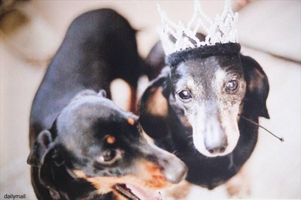 イギリスでクローン犬誕生! ウィニーとそのクローン犬のミニウィニー