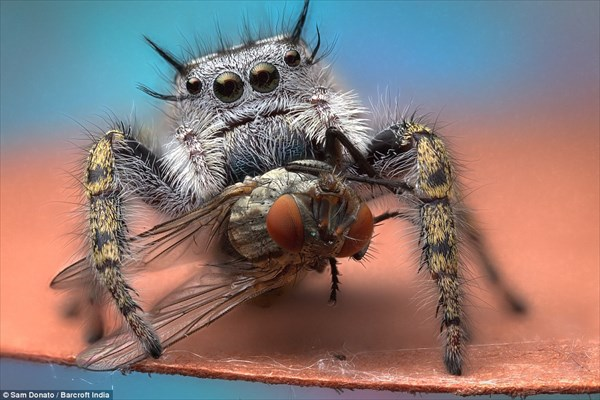 気持ちるいけど神秘的な魅力を感じさせる クモのお食事シーン!!