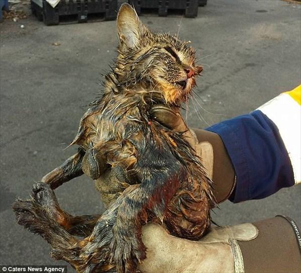 ゴミ収集車の中でゴミに埋もれていた子猫 焼却炉に入れられる直前で無事救出!