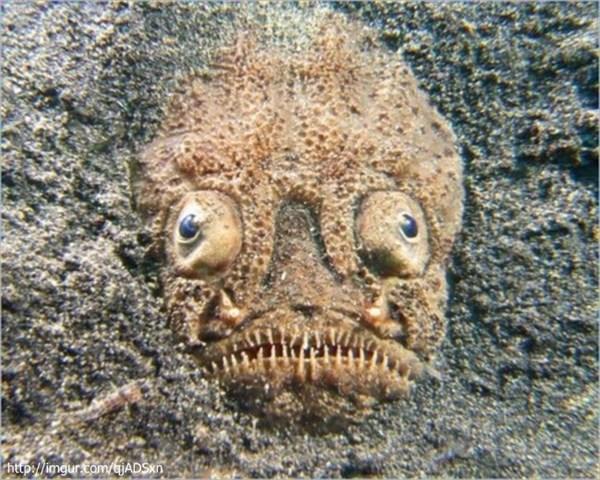 海底に潜む悪魔 ノーザンスターゲイザー! 用途は不明だが電気も放出!