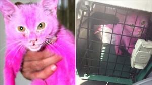 ピンクに染められて市場で売られていた子猫 フェイスブックがきっかけで救助!