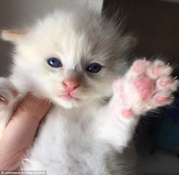 2日間にわたって石の間に挟まっていた子猫 通行人の通報によって無事救出!
