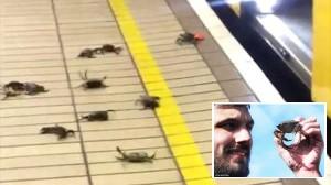 カニを使ったテロ行為!? イギリスの地下鉄にカニ出現!!