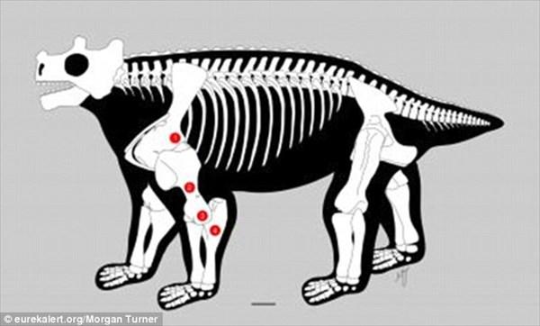 史上最も醜い生物? 恐竜の前時代の生物ブノステゴス 超ダサかったことが判明