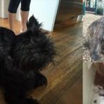 犬を盗んだホームレス 飼い主にバレないように盗んだ犬を黒く染めるも発覚!