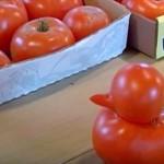 アメリカで、アヒルそっくりのトマトが収穫される!