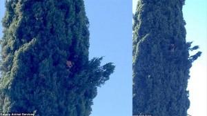 なぜそんなところに! 高さ7.6mまで木登りをした犬、消防隊員によって救助