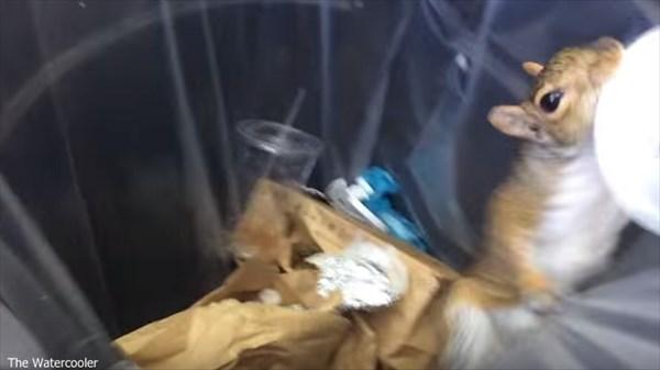 「やっぱシェイクは、たまらねえ!」 ゴミ箱のシェイクをテイクアウトするリス