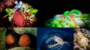 台湾のカップルが撮影したカラフルな太平洋の海の生き物たち!