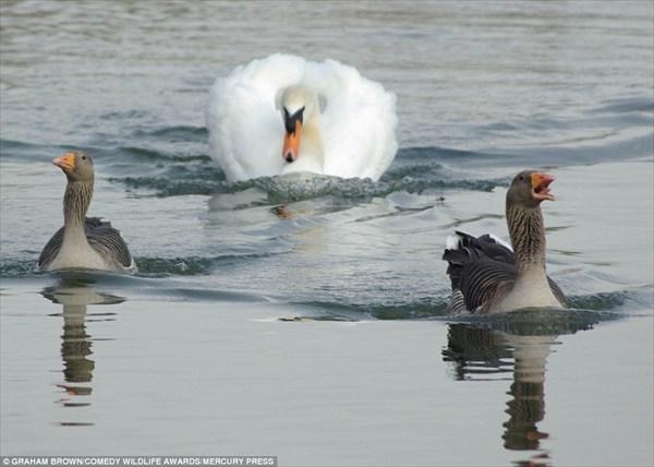 動物の奇跡的な瞬間をとらえた画像! 野生動物コメディー写真エントリー作品!