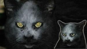 不吉の象徴!? 小麦粉をあびた黒猫「悪魔のようだ」とネットをざわつかせる!