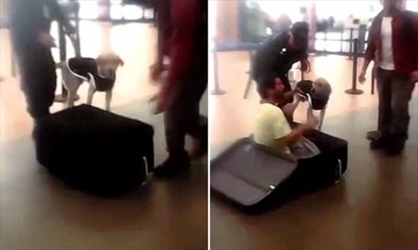 スーツケースに隠れて国外逃亡をはかった男 探知犬によってバレる!