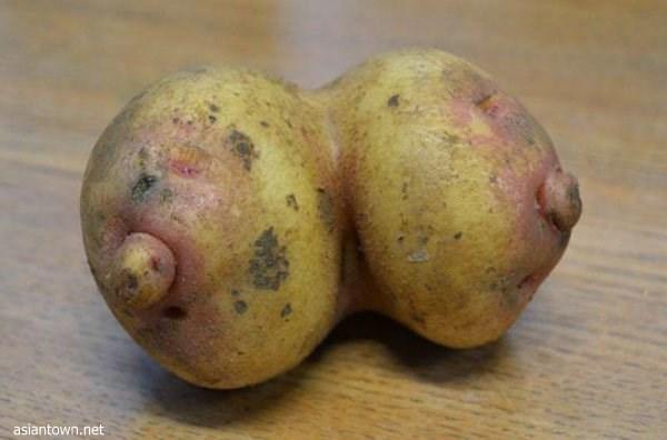 「野菜だから全然問題ないし!」セクシー?下品?ちょっとHな食品たち 25選