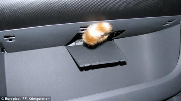 「ハマっちった…助けて」車のダッシュボードにはまった子猫 消防士により救出