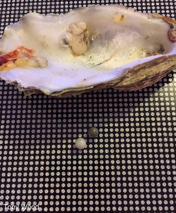 牡蠣を食べていたら中から真珠が出てくる!しかも2つ! 品質次第では20万!