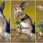 トゲだらけの草を食べるウサギ やっぱトゲが刺さって激痛リアクション!