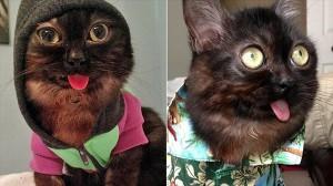 常にベロが出っぱなし! 不気味猫のミスターマグー!!