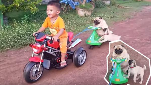 バイクを楽しむパグと、「僕も乗せてよ!」とバイクに乗りたい子パグ