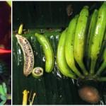 タイで新種の野生のバナナが発見される! ちゃんとバナナだがやはり種だらけ