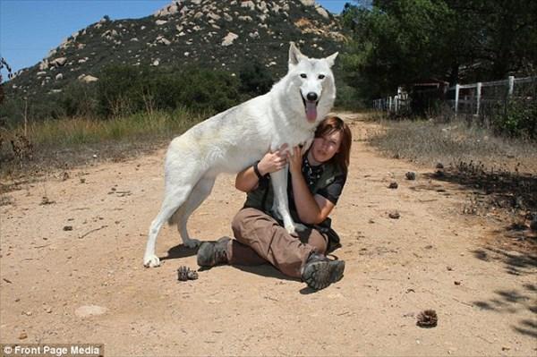 寝ている間に襲われないの? オオカミとベッドを共にする女性