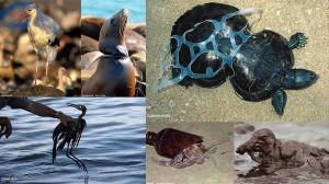 経済成長の影 環境汚染に苦しむ動物たちの画像15選!