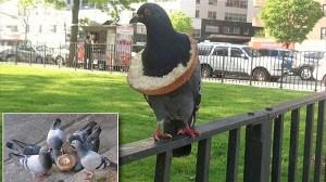 「あれ?さっきまで食べてたベーグルは?」 ベーグルを身につけたおバカなハト