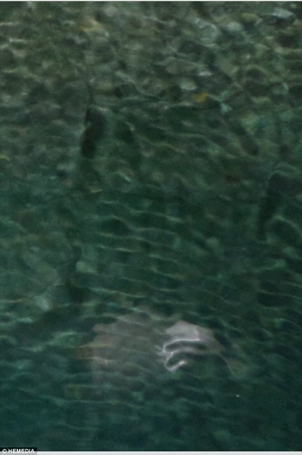 新種の海獣発見か!? ギリシャ・コルフ島の海中洞窟で謎の生物が撮影される