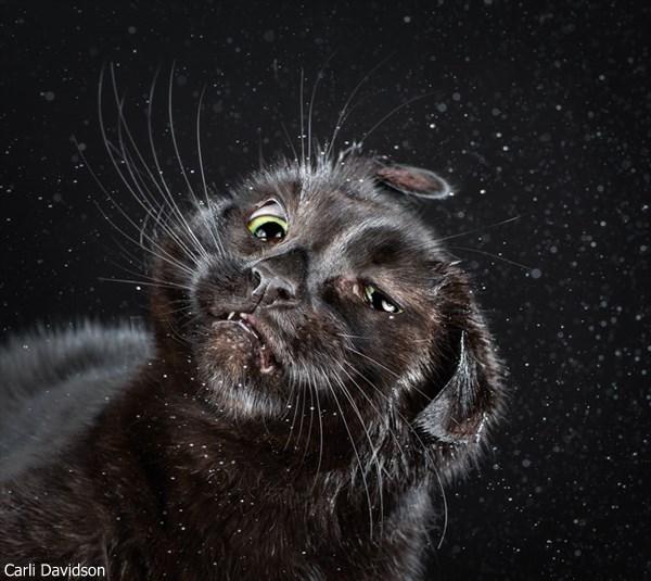 ブサかわいい!? 首を振る猫の写真だけ集めた本「シェイク・キャッツ」発売