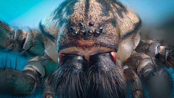 まるでエイリアン! 身近に生息している小さな生物たちのズームアップ写真